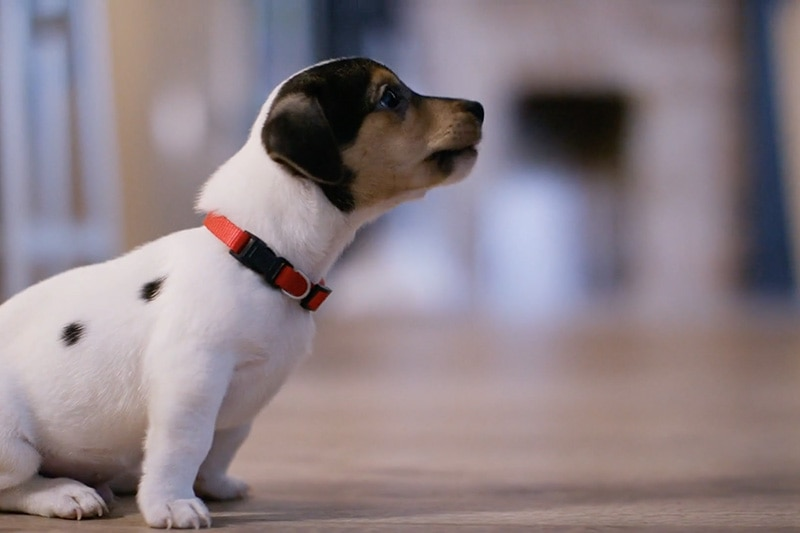 video - does indoor air quality affect my pet?